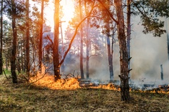 Wildfires and Your Home's Electrical System